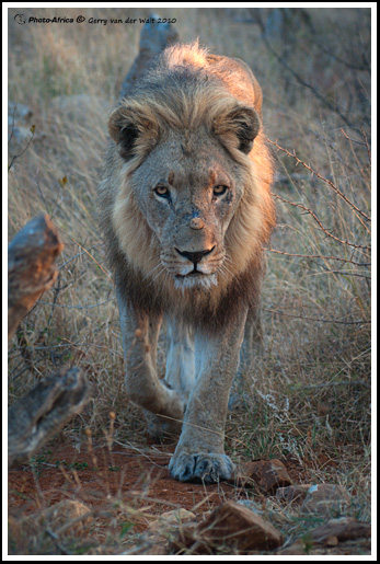 Eye Contact - Image by Gerry van der Walt