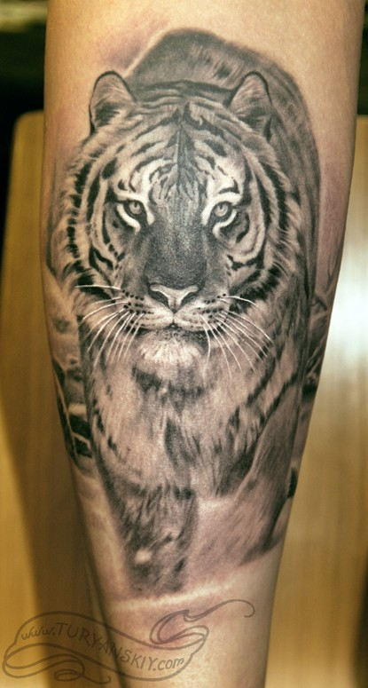 tiger tattoos on calf. Tattoo by Oleg Turyanskiy,
