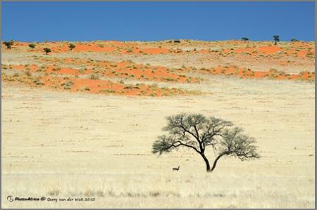 Image by Gerry van der Walt - Springbok