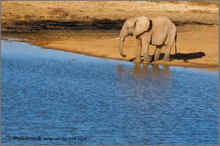 Image © Gerry van der Walt - Elephant Drinking