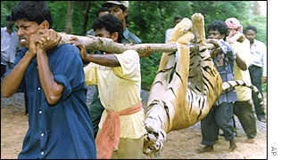 """Humans are More Valuable Than Tigers"""": Indian Chief Minister ..."""