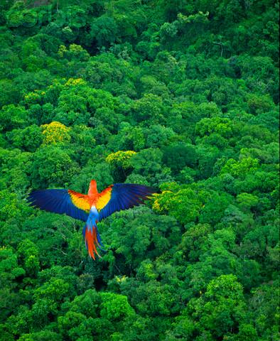 Rainforest Birds Flying Trained Parrot Blog - ...