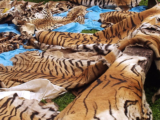 eia warns chinese prime minister wen jiabao of tiger vow mockery